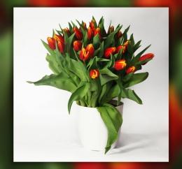 Bukiet z 50 tulipanów