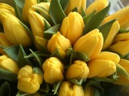 Kolory Tulipanów w Naszej kwiaciarni